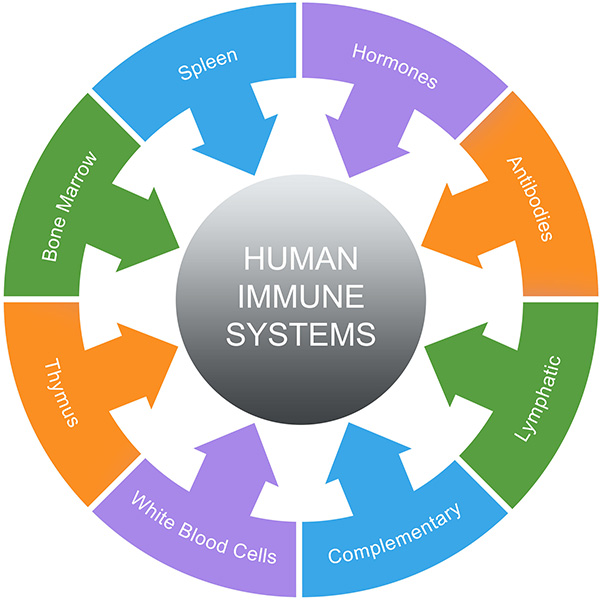 26184745 - immune system word circles concept with great terms such as spleen, hormones, antibodies and more.